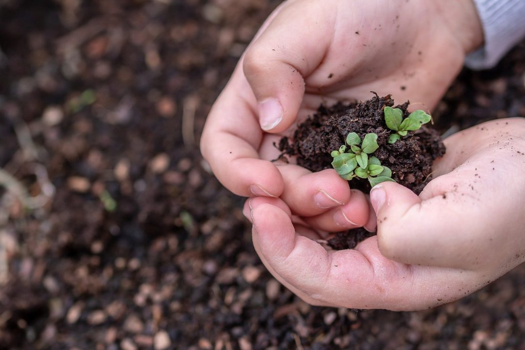 A child holds seedlings